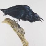 Black Crow 1. 113cm x 81.3cm. Graphite, gesso, ink and pastel on archival paper