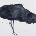 Black Crow 2. 60cm x 84cm. Charcoal, gesso, ink and pastel on cartridge paper